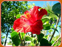 2011 Angelinos Sea Lodge garden (4)