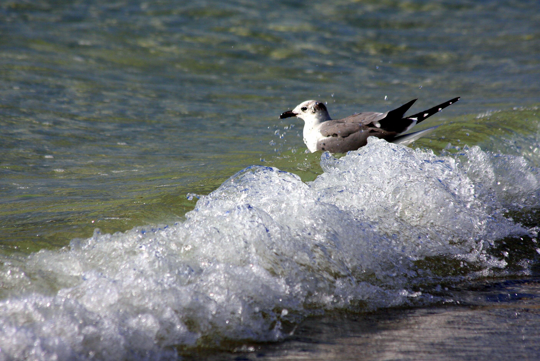 Wild sea life (6)