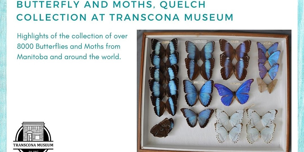 Virtual Small Talk: Butterflies and Moths