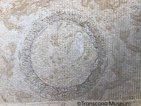 Fossil Hunting at Transcona Museum