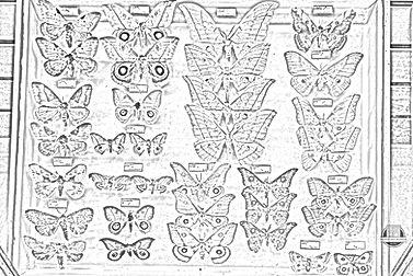 Moths_colouring.jpg