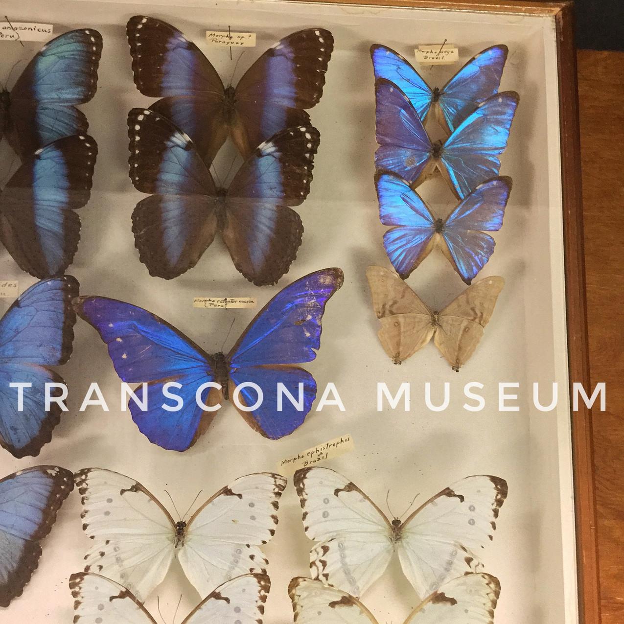TM Natural History