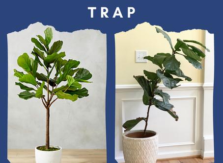 The Comparison Trap