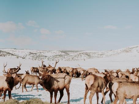 Hardware Ranch | Utah Photographer