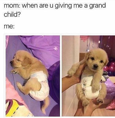 Dog Grandmas
