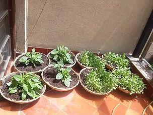 Kitchen-Gardens6.jpg