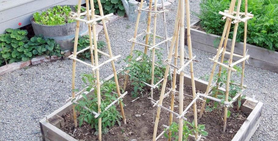 Bamboo Trellies