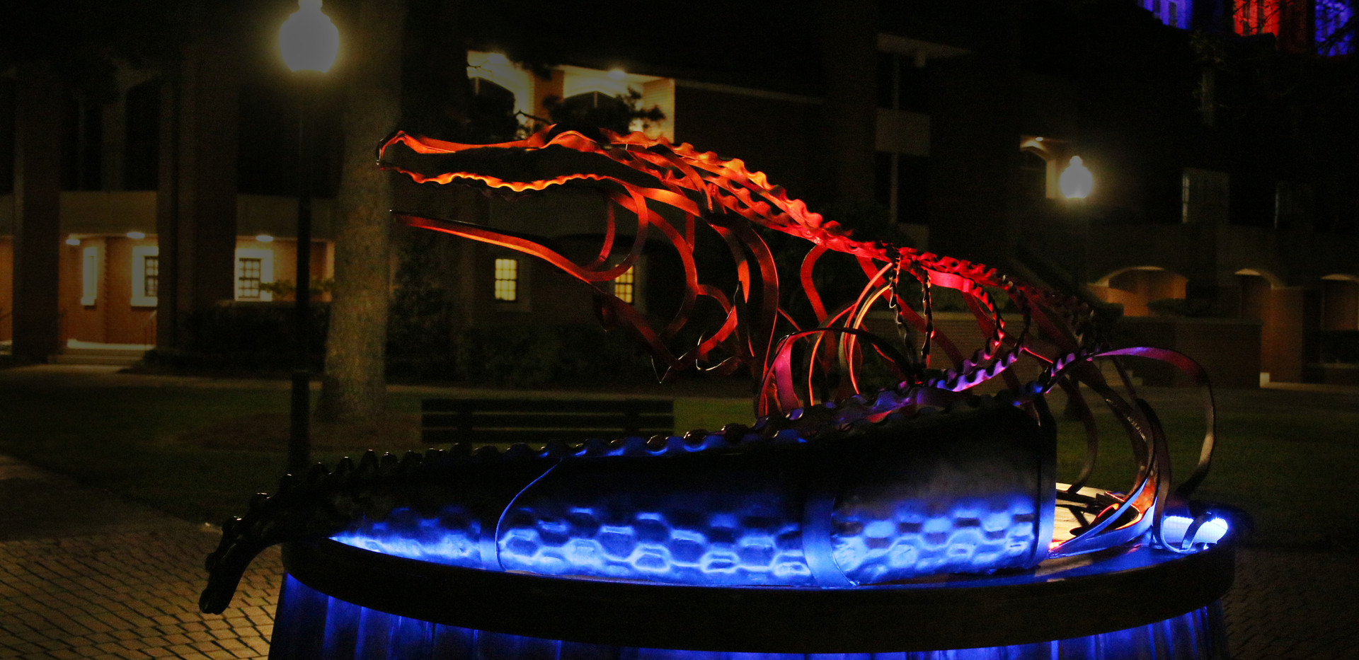 Gator at Night.JPG