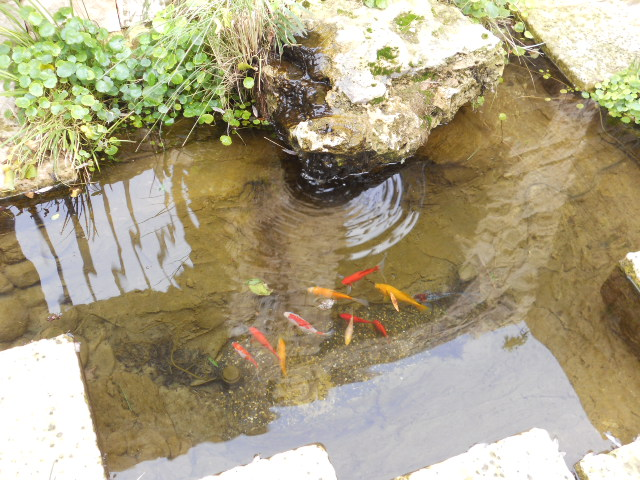 3-v+fish.JPG