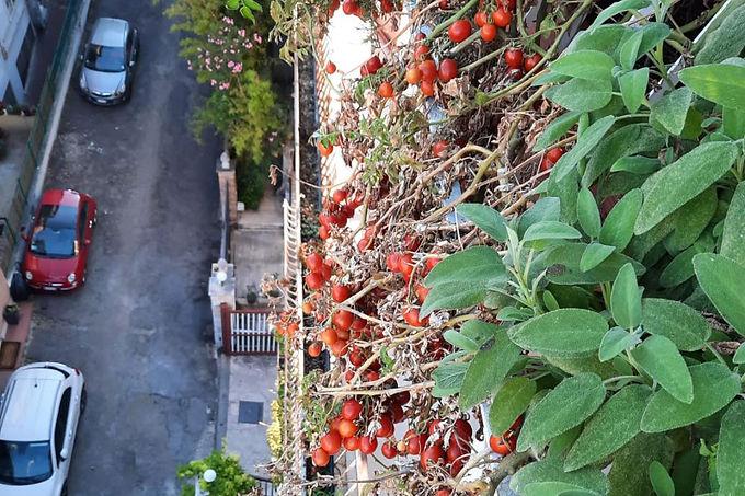 Urban vertical garden.jpg