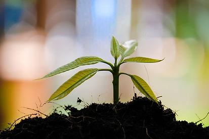 Soil rehab.jpg