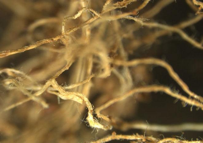 Soil_Agregation2.jpg