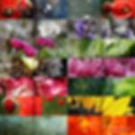 Buch Bilder geschn - re plus Collage.jpg