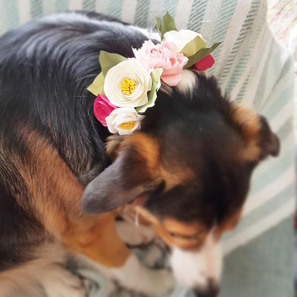 My boy Steve flower collar