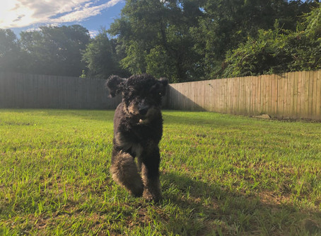 How to Keep Your Dog Safe in the Summer Heat, Plus Tips Regarding Health & Exercise
