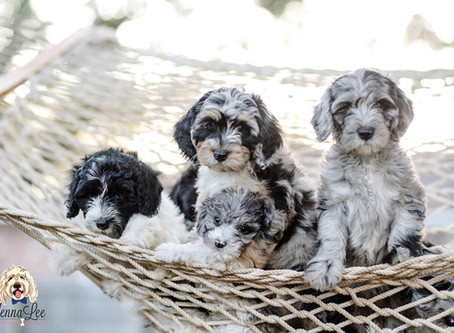 No, It's Not Wrong to Buy a Puppy from a Breeder — Here's Why!