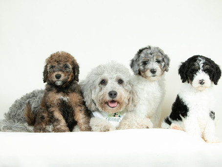 What Do Dog Breeders Look for in Buyers & New Puppy Owners?