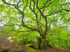 Lake District 1.jpg