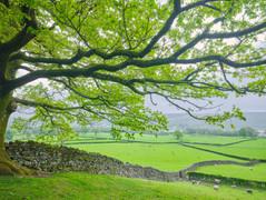 Lake District 7.jpg