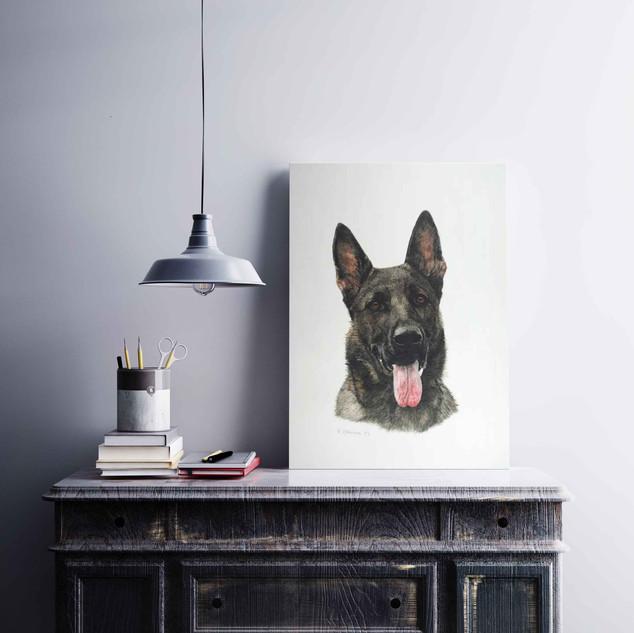 Hundeportrait Schäferhund
