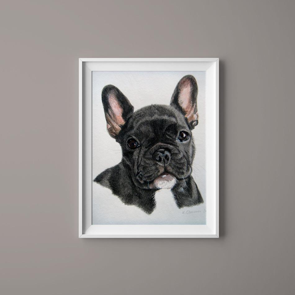 Hundeportrait Französische Bulldogge
