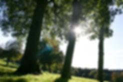 woodmancott5.jpg