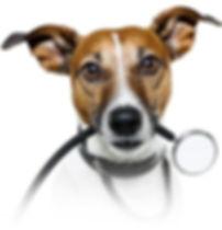 Ветеринарная клиника Вышгород