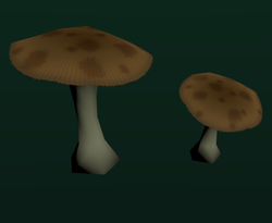 PaleMushrooms1