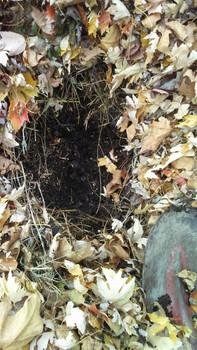 compost01.jpg