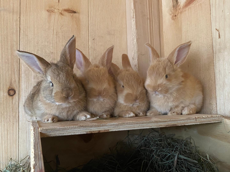 Babby Bunny Quartet