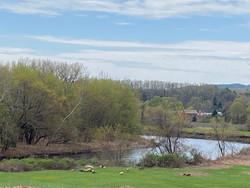 Sheep along the river