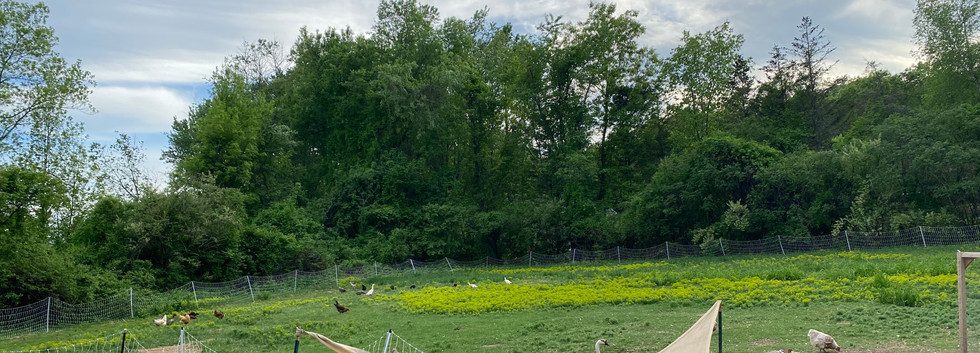 1/2 acre poultry pasture