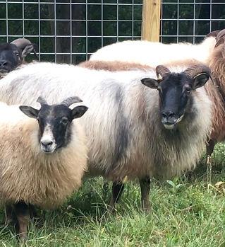 Chloe&lamb.jpg