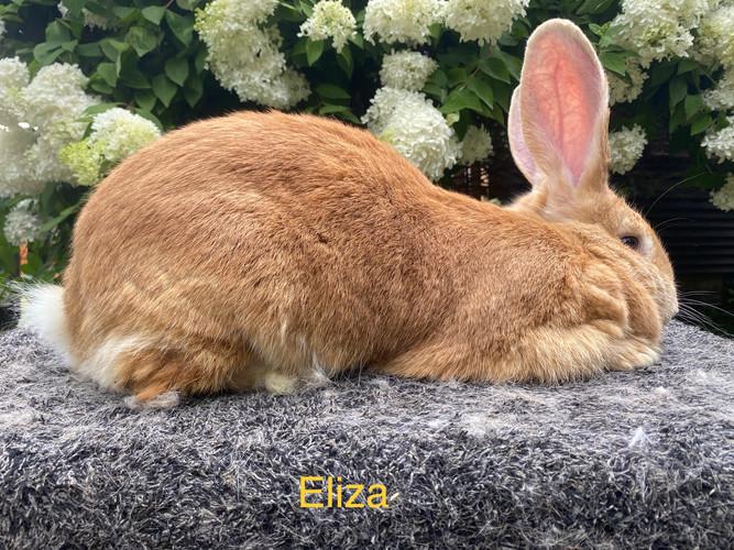 Eliza - Sr. Doe