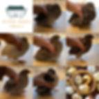 quail_collage.JPG