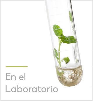 en el laboratorio 2.png