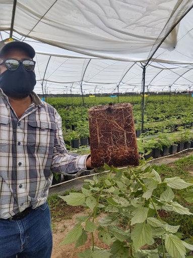 Agricultor mostrando resultados