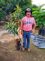 Agricultor con planta de aguacate