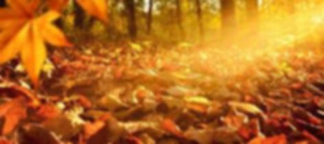 Herbst.jpg