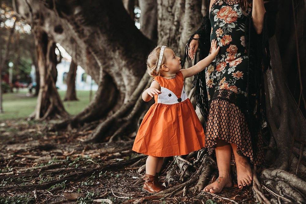 Banyan Tree Photo St. Petersburg Florida