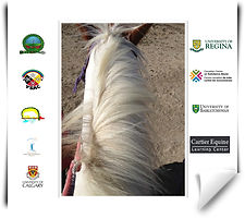 reaserch for equine assisted learning