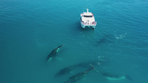 Aerial video whales 2