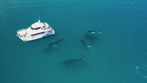 Aerial video whales 1