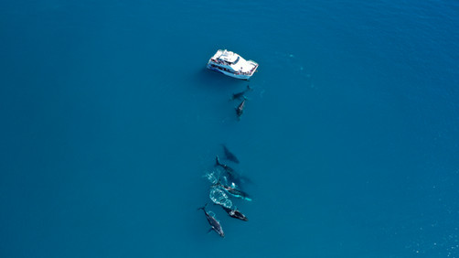 Aerial photo whales 1