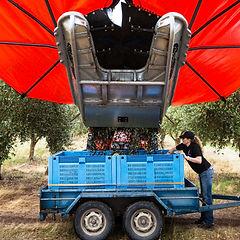 Romley Estate Harvest-5_edited.jpg
