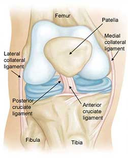 ACL Injuries... Prevention or Reduction?