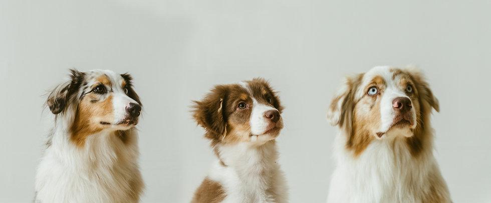 dogs_magnum-87.jpg