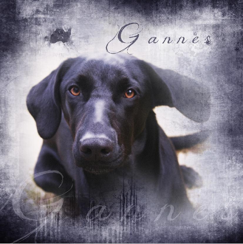 Gannes1.png