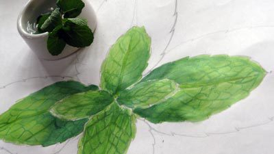 Estudo folha de Hortelã