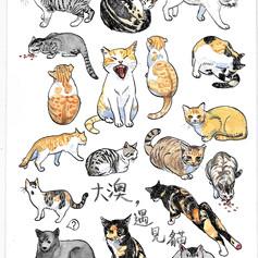 大澳,遇見貓